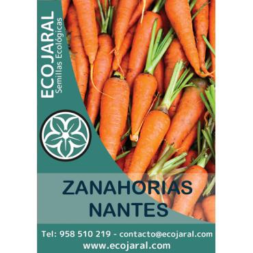 Semillas de Zanahoria Nantes