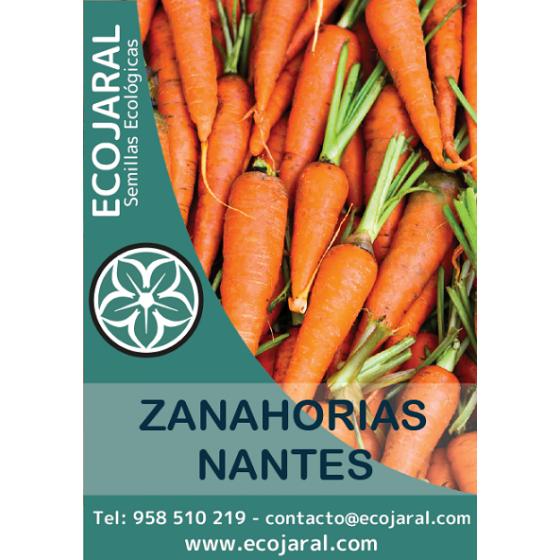 Semillas De Zanahoria Comprar Semillas Horticolas En Ecojaral Descubre cuáles son las propiedades nutricionales que tienen los alimentos. ecojaral