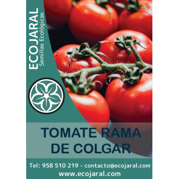 Semillas de Tomate Rama de...