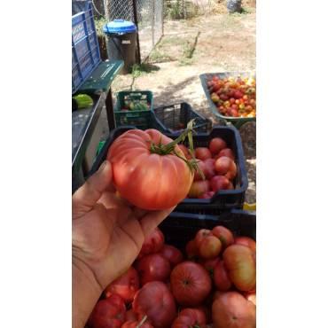 Tomate Rosa - 0.500kg
