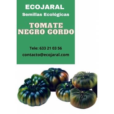 Semillas de Tomate Negro Gordo