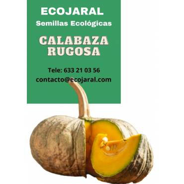Semillas Calabaza Rugosa