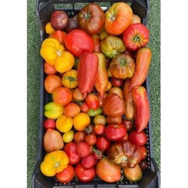 Tomate Variedades Puras...