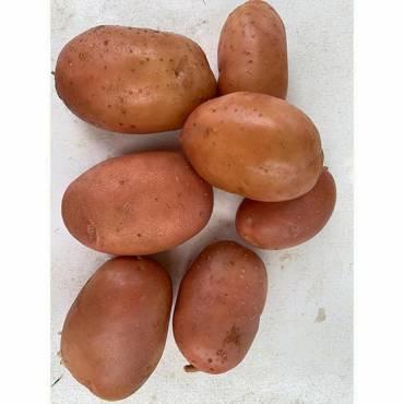 Patata Nueva Roja Bartina...